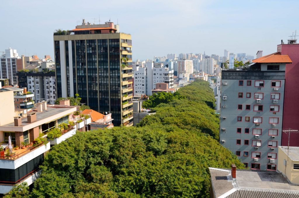 imagem de uma rua arborizada